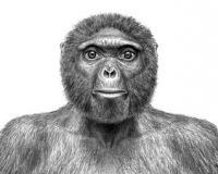 Учёные обнаружили останки общего предка обезьяны и человека