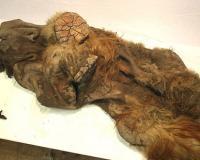 Американец выкопал на своем поле останки гибридного мамонта